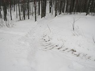 Трасса Дуатлона Снежный от XCnews
